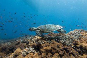 Turtle Diving in Lembongan
