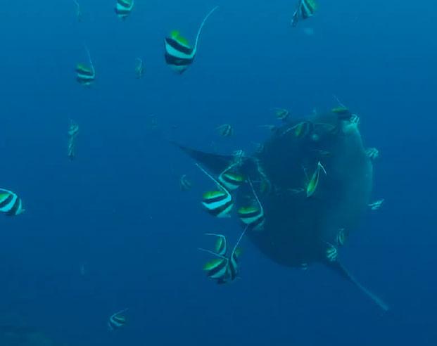 Molas in Lembongan Cleaning